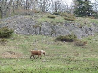 pony in front of rock hill